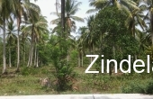 ZDP15126, 7 Hectares Land For Sale in Quezon,Palawan