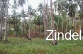 ZDP15128, Beach Front Property for Sale in Quezon,Palawan
