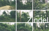 123, 15 Hectares of Land For Sale In Puerto Princesa